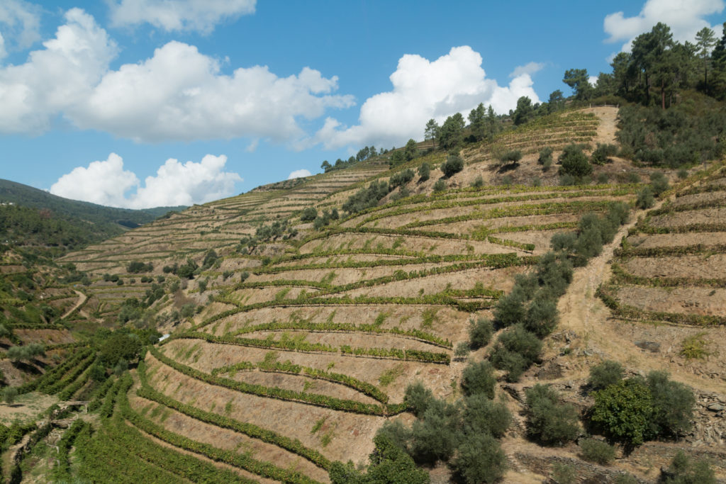 This place is a UNESCO World Heritage Site, listed as Alto Douro Wine Region